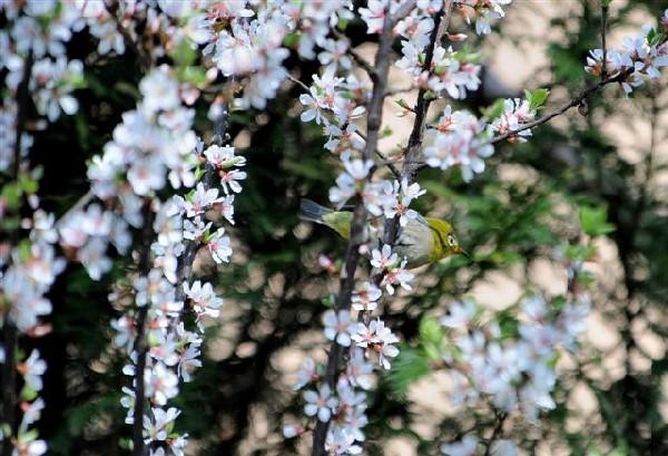 20080406 nakamura-meziro-DSC_8441
