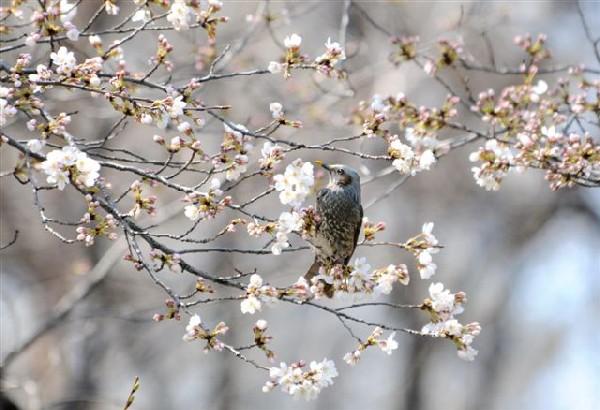 20080407 nakamura-hiyodori-DSC_8253