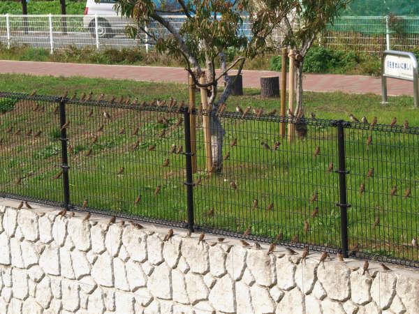 20081110 110羽のスズメ