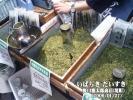 野口徳太郎商店(境町)
