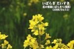 花の楽園 いばらきへ(茨城県境町)