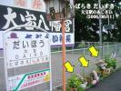 関東鉄道常総線 大宝駅のあじさい