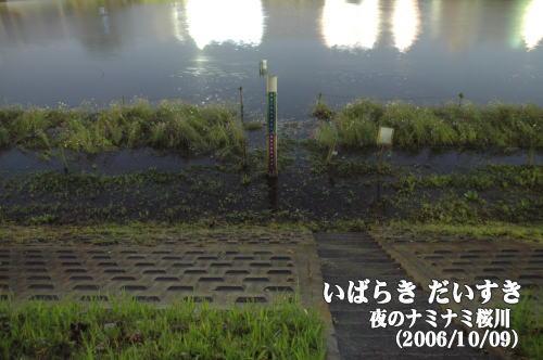 夜のナミナミ桜川