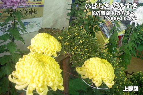 笠間稲荷の菊まつり(茨城県笠間市) 花の楽園いばらきへ(常磐線上野駅)