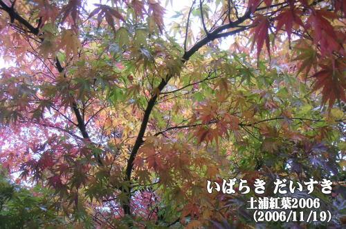 土浦紅葉2006(茨城県土浦市/霞ヶ浦土浦入り)
