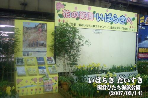 花の楽園 いばらきへ_国営ひたち海浜公園(茨城県ひたちなか市)