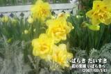 花の楽園いばらきへ