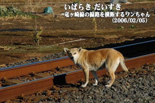 関東鉄道竜ヶ崎線の線路を横断するワンちゃん