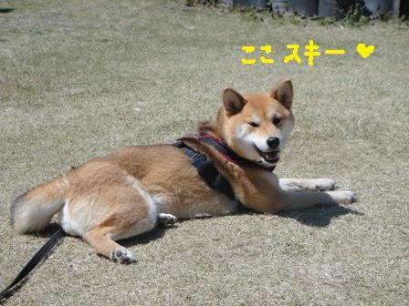 ichi101g.jpg