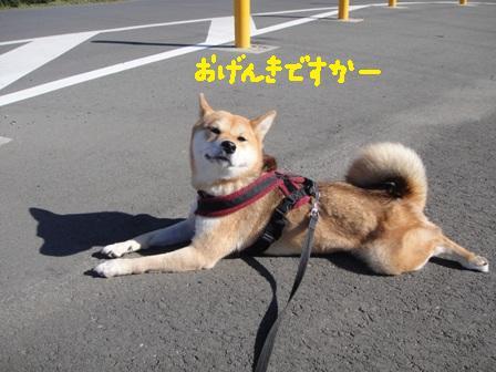 ichi95d.jpg