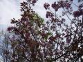 spring2009-3.jpg