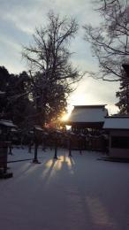 H231月雪