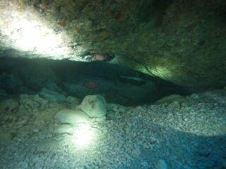 20110925ホワイトチップサメ
