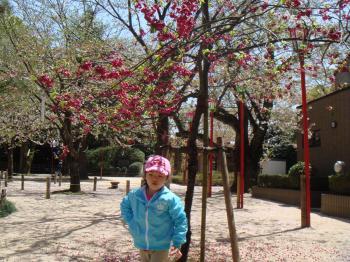 kannhisakura_convert_20090418192913