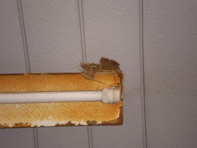 ツバメの巣3_convert_20090519174133