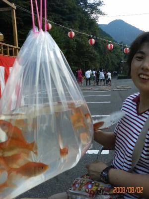 沢山の金魚