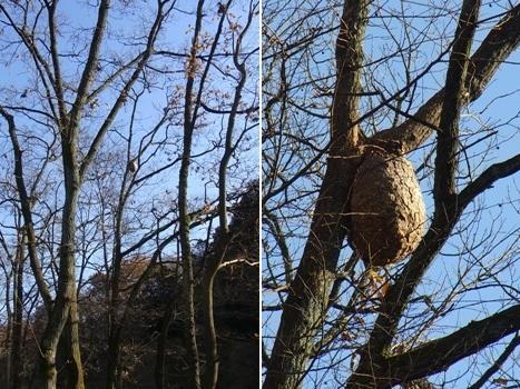 きれぎれの風彩 「巾着田の初冬」05スズメバチの巣