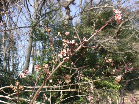 「自然観察公園の冬~花のような!?」