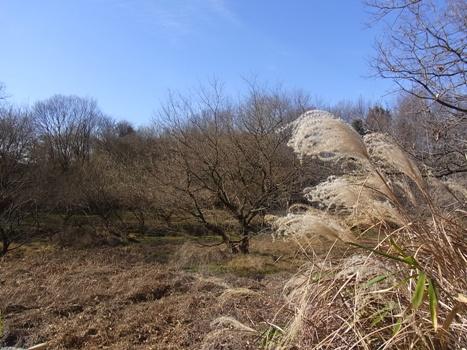 「自然観察公園の冬~アレコレ」