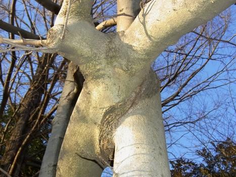 きれぎれの風彩 「コブシの枝」02