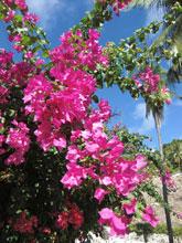 もう、南国らしさ満開ですな 青とピンク!!