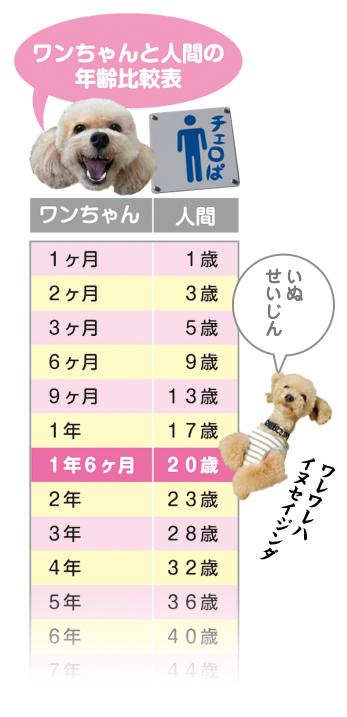 hyougumi353535.jpg