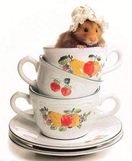 お茶飲みたい~(;ω;)