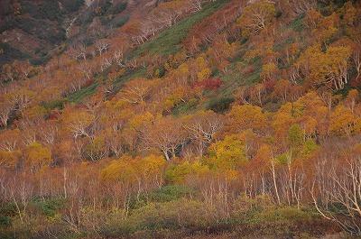 20081013.14栂池 249-1