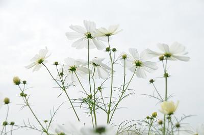 20081004庭の花 088-1