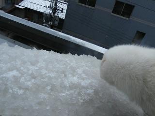 初雪1102-4
