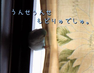 mumu241.jpg