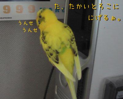 popo129.jpg