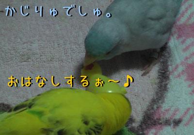 popomumu64.jpg