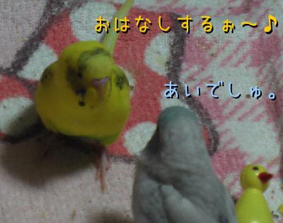 popomumu66.jpg