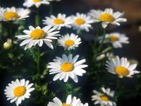 Flower1-001.jpg