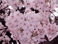 Flower1-005.jpg