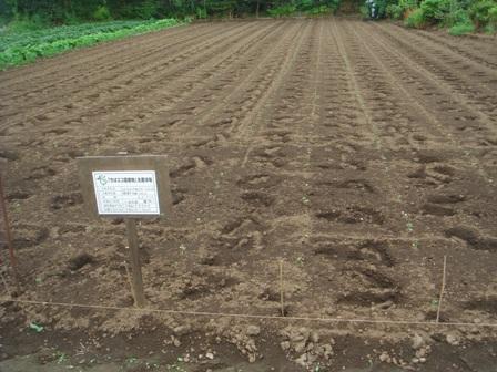 20097.11家のハウスの野菜とクラブの大豆畑 004
