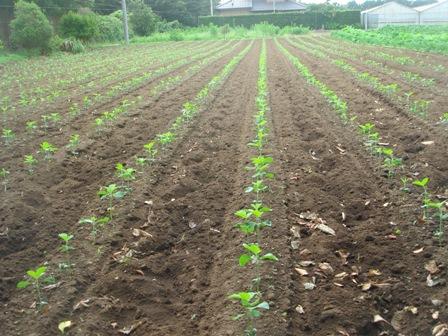 20097.12~3自宅周辺の野菜 008