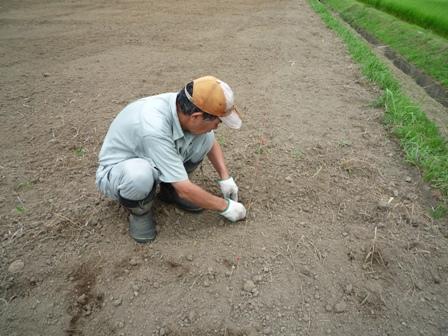 2009.7.19大豆の種まき