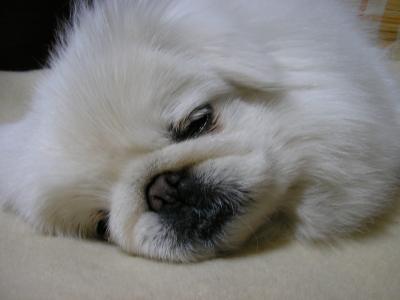 おやすみスマイル