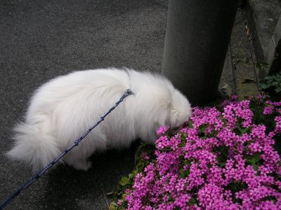 ピンクのお花①
