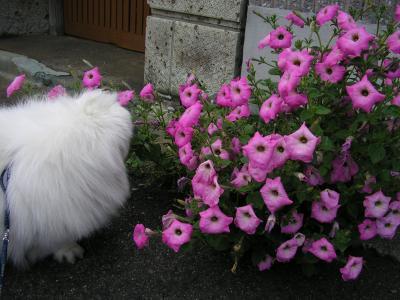 ピンクのお花②