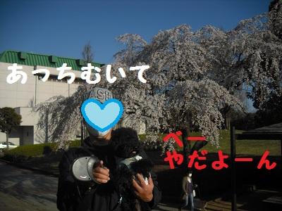 CIMG2256.jpg