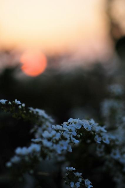 春雪のごとく