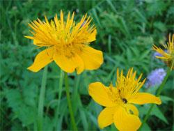 乙女高原の花