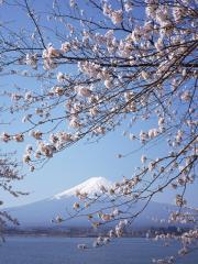 富士山と桜_convert_20110420220429