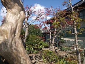 岩手の庭+007_convert_20110423132129