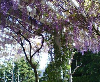 200805fuji.jpg