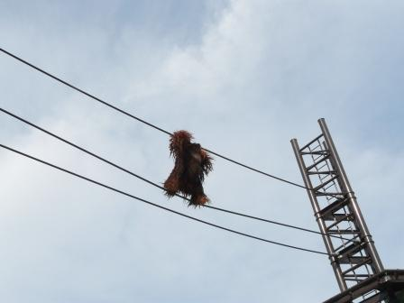 オランウータンの綱渡り 4