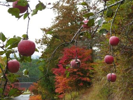 ふるさと旅行村 りんご園 2